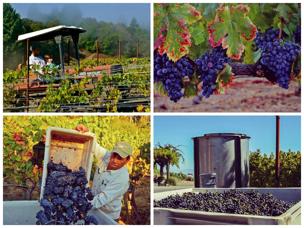 ameryka_usa_blog_kalifornia_wino_thomas_fogarty_winery-2