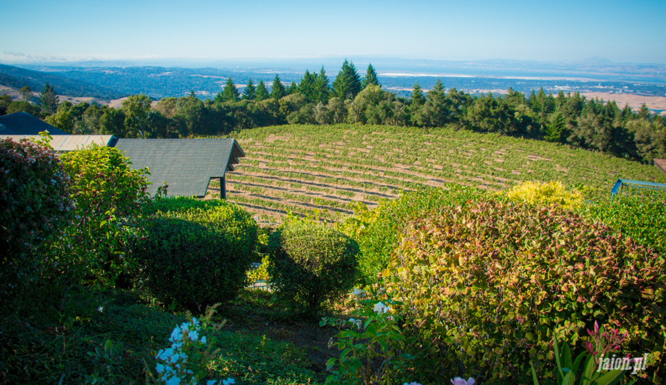 ameryka_usa_blog_kalifornia_wino_thomas_fogarty_winery-72