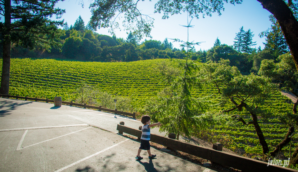 ameryka_usa_blog_kalifornia_wino_thomas_fogarty_winery-81