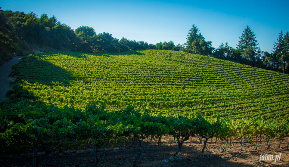 ameryka_usa_blog_kalifornia_wino_thomas_fogarty_winery-91