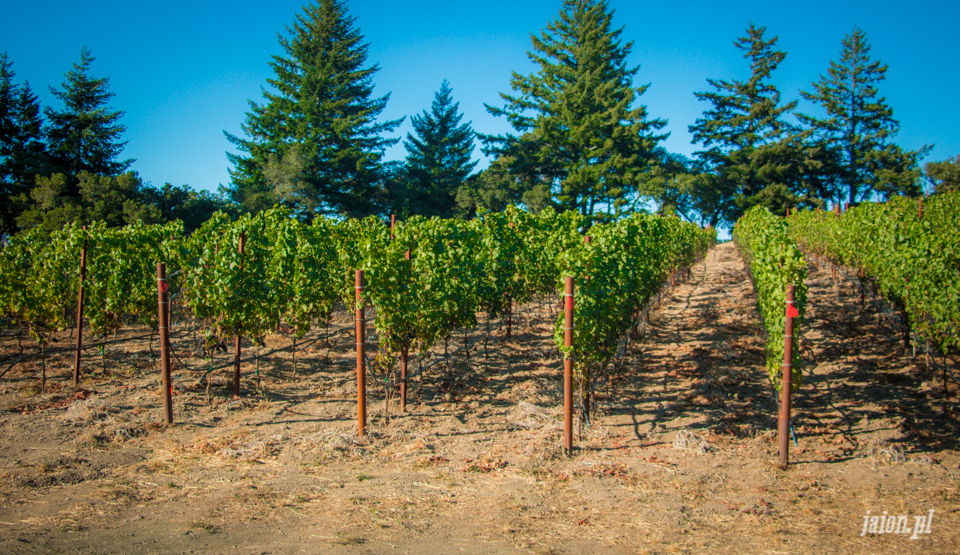 ameryka_usa_blog_kalifornia_wino_thomas_fogarty_winery-93