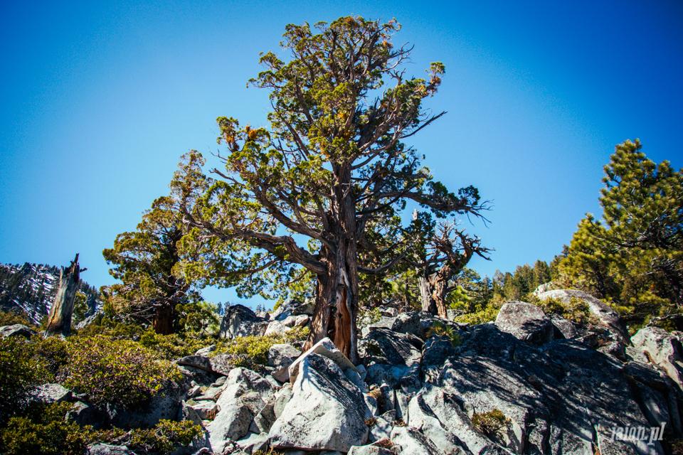 ameryka_kalifornia_tahoe_lake_jezioro-106